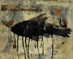 Peix negre, 2016