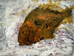 Peix taronja, 2016