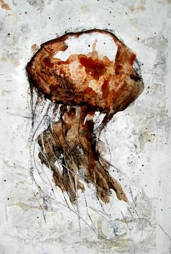 Medusa rogenca, 2016