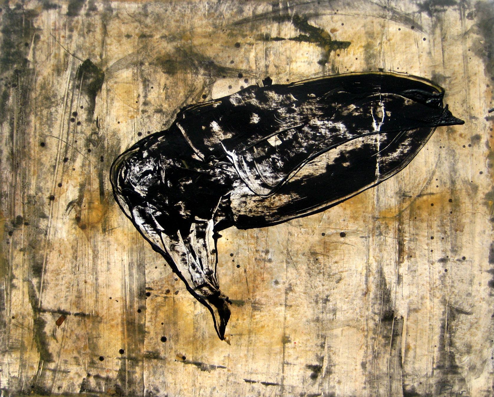 Calamar tinta negre, 2016