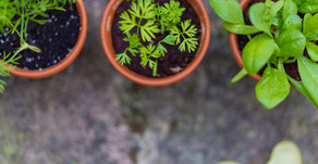 FRESH HERBS: DO WE UNDERESTIMATE THESE LITTLE GUYS?
