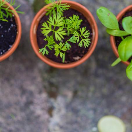 Plants that Double as Alternative Medicine
