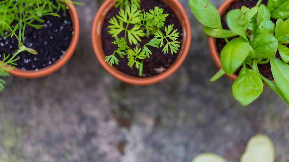Herbal Trio