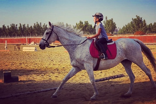 Horse Riding Lesson (Individual)