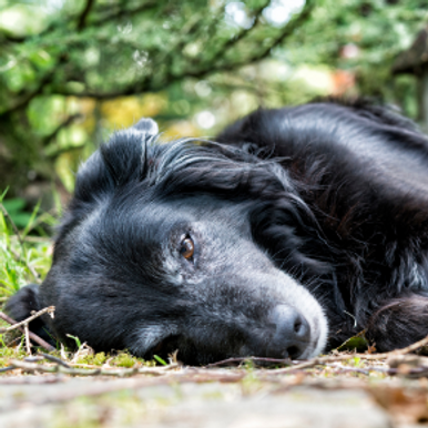 The Northlands Group guide to Gastric Dilation Volvulus in dogs