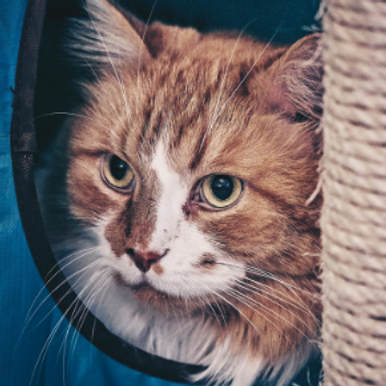 Going away? Get our head nurse's cat holiday care checklist