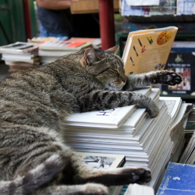 Cat & Rabbit Care Clinic's top 10 books for animal lovers this Autumn