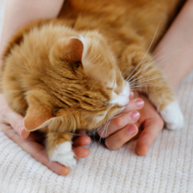 Finding the right cat vet in Northamptonshire