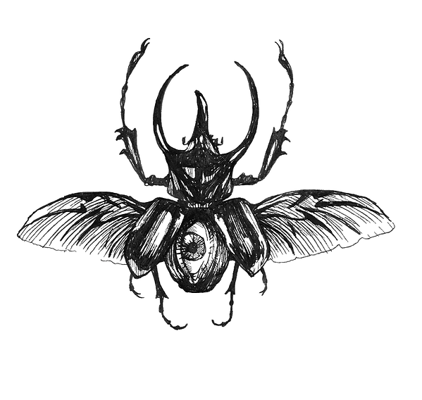 line art of a beetle with an eye on abdomen