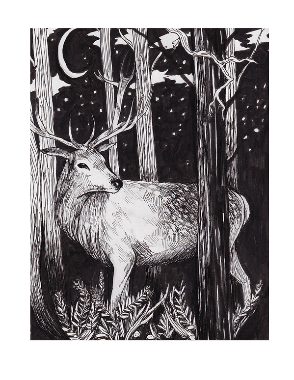 illustration of a deer with antlers at night