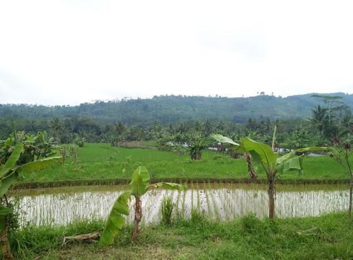 Menggali Potensi Desa: Belajar dari BUMDES Silatri Indah