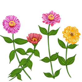 zinnias_on_stems.png