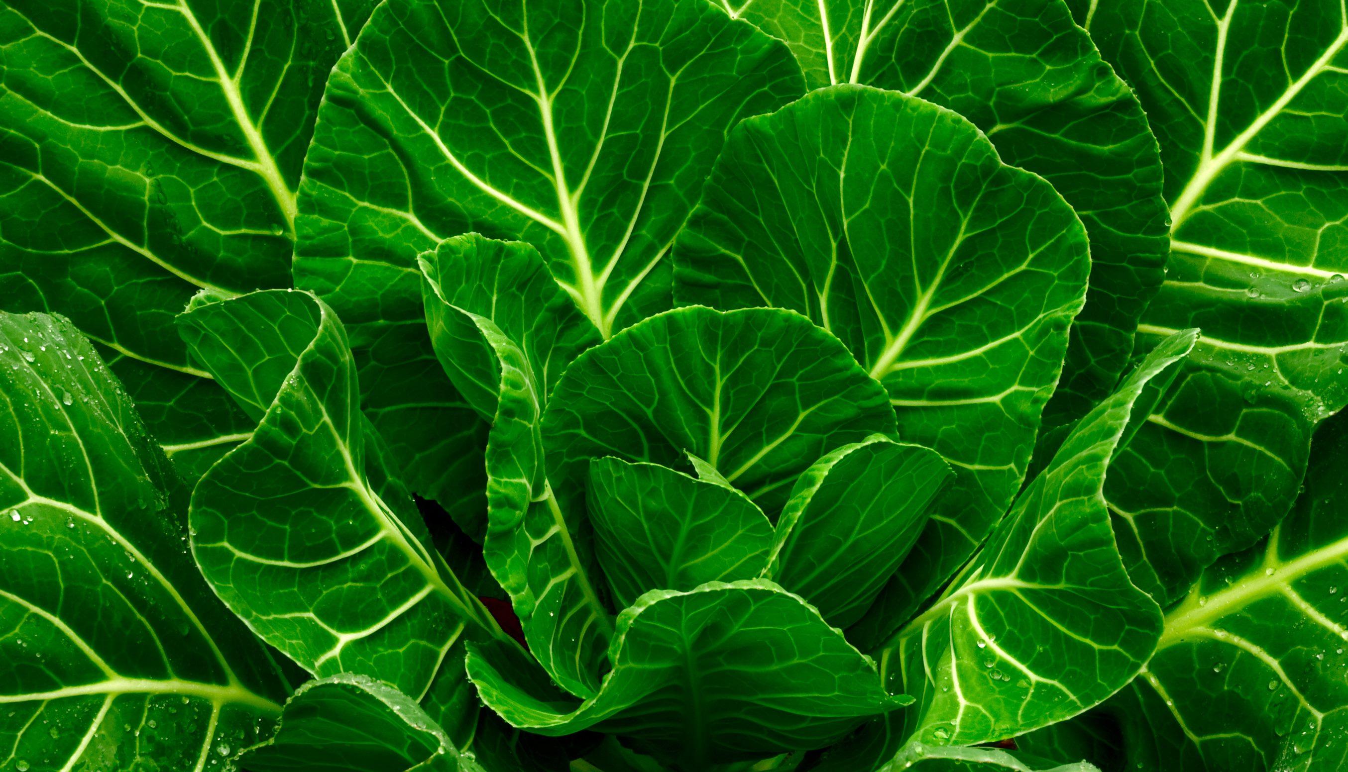 Common Leafy-greens.jpg