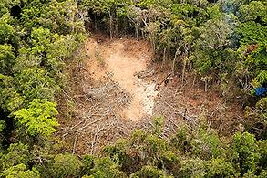 desmatamento.png
