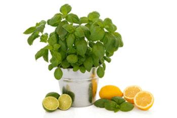 Cool citrus basil lotion