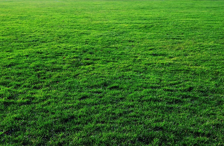 deep-green-grass-texture.jpg