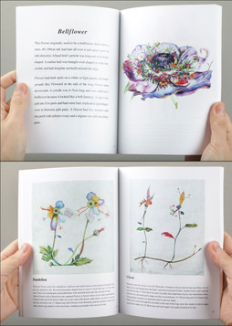 Illustrated Book of Hybrid Flowers Page 10-11, 16-17