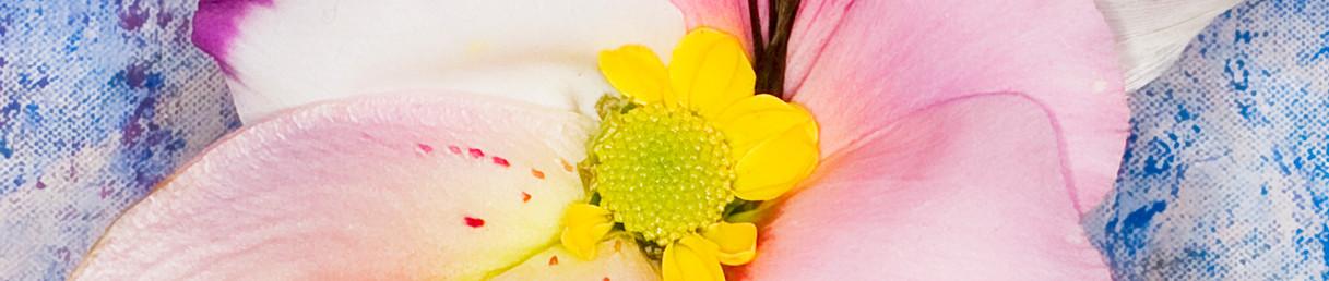 Hybrid Flower_Feather