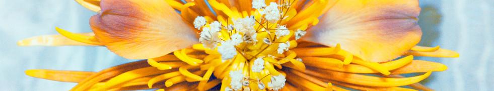 Hybrid Flower_Chrysanthemum #2