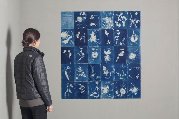 Hybrid Flowers Cyanotype Specimina (Installation View)