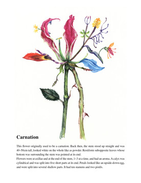 Illustrated Book of Hybrid Flowers_Carnation