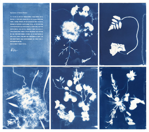 Hybrid Flowers Cyanotype Specimina #1-#6