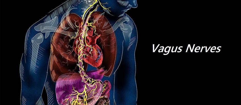 Reiki, Healing, and Vagus Nerve