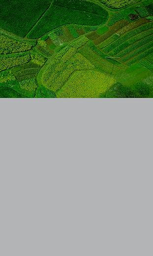 Geospatial Agriculture Tile.jpg