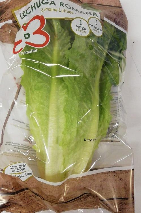 Cos Lettuce - x1