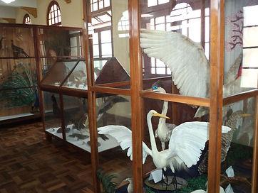 Museu ....br.jpg