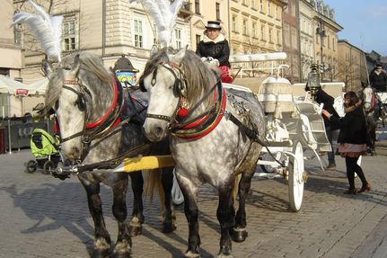 Cracóvia_cavalos ....br....jpg