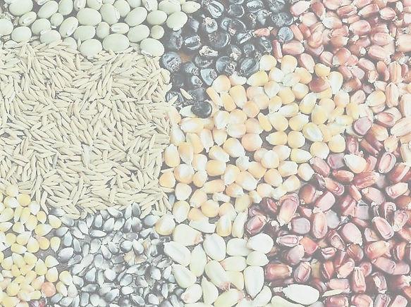 sementes-crioulas-epagri%20(2)_edited.jp
