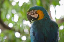 Pantanal Birds - Brazil