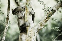 Kruger Nacional Park