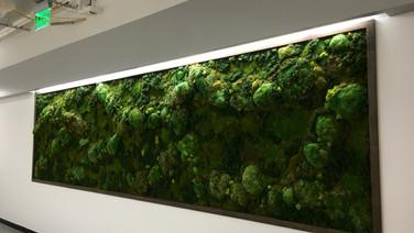Goolgle SB30 moss wall FullSizeRender.jp