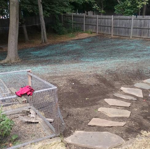 K. Darr backyard (before 3).jpg
