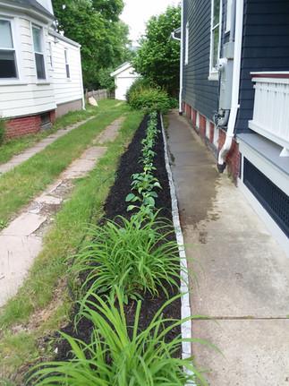 B. Tupper side bed mulch (1).jpg