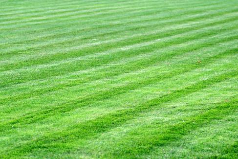 grass-2981390_1920.jpg