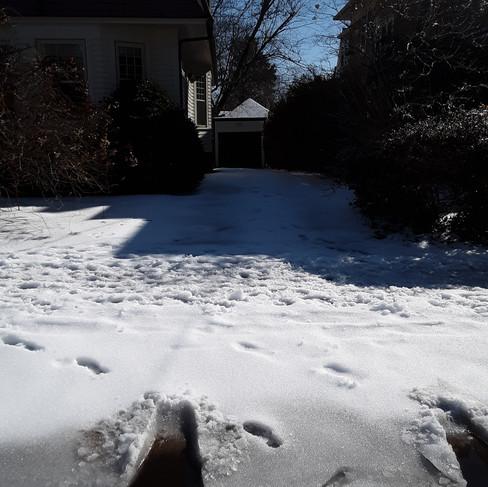 Renate - driveway (before).jpg