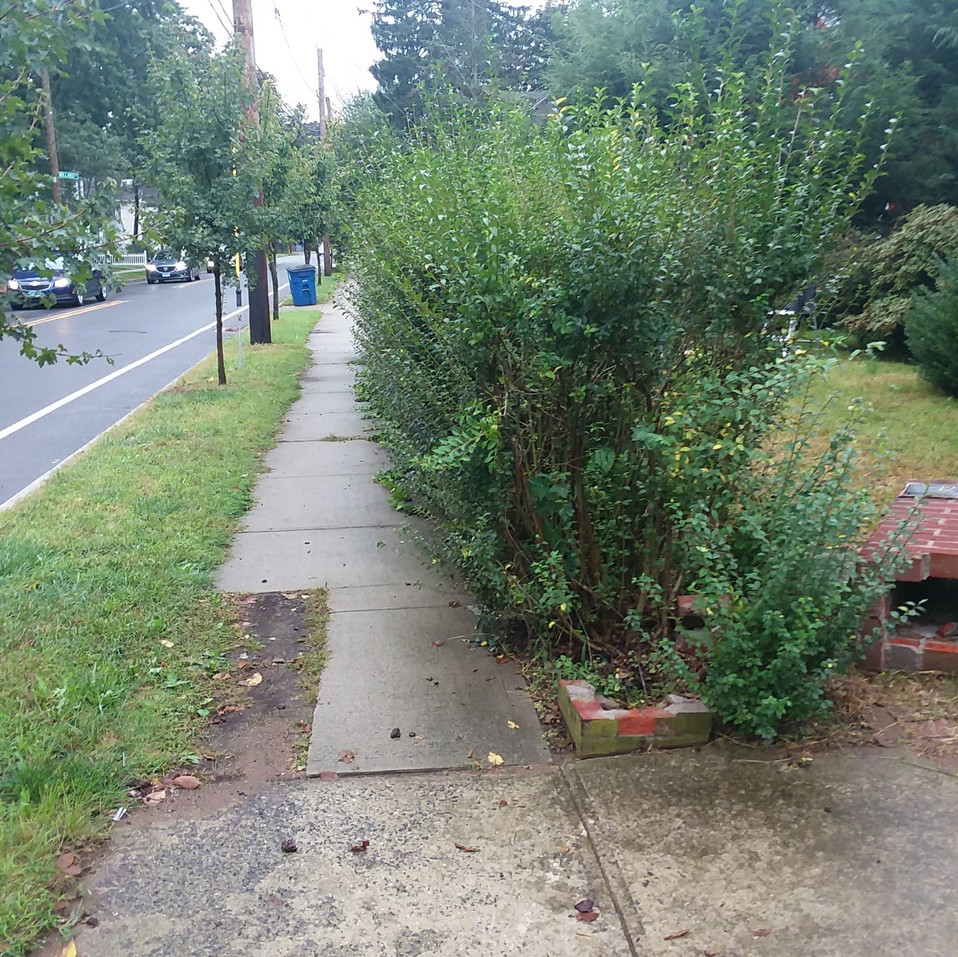 A. Winslow front hedge trim (before).jpg