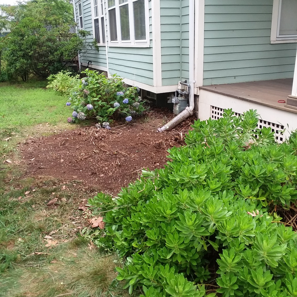 J. Kaufman shrub removal (after).jpg