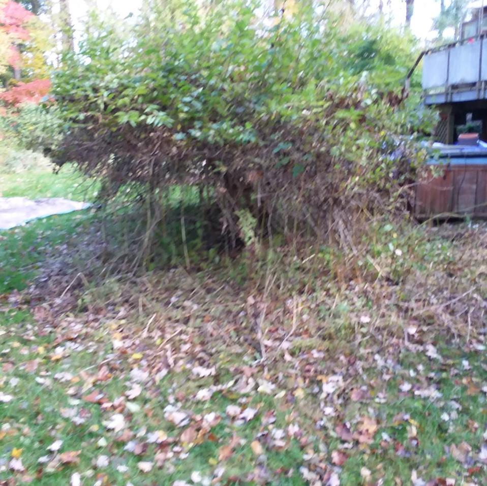 Ransom - Back tree (before).jpg