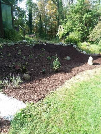R. Wilson backyard mulch 2.jpg
