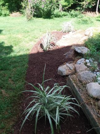 R. Wilson backyard mulch.jpg