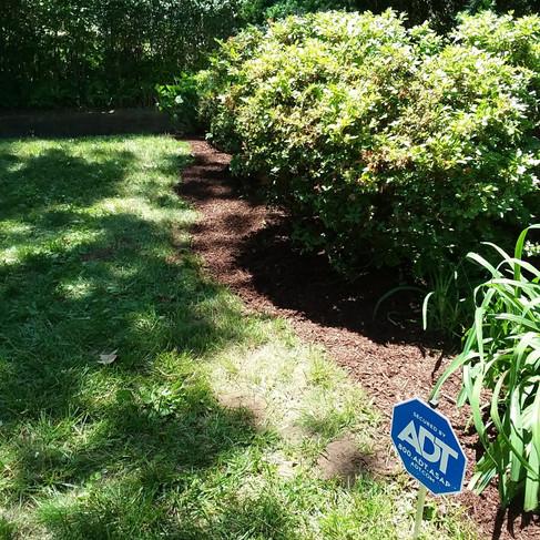 Mira front shrub trim (after).jpg