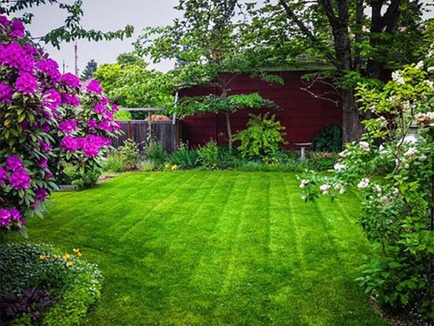 manicured-lawn-and-purple-flowers.jpg