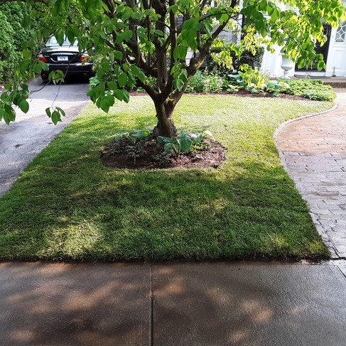 Mike - Sod (after).jpg