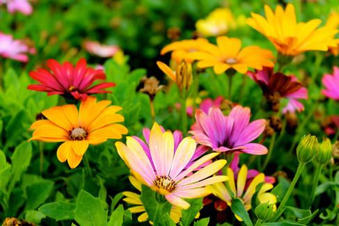 beautiful-bloom-blooming-298246.jpg