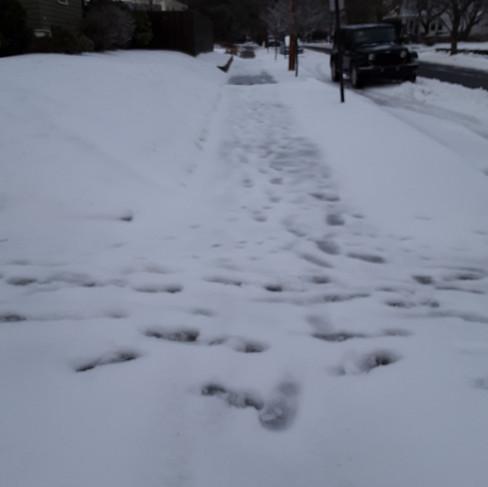 Matt Goldenberg - side sidewalk (before)