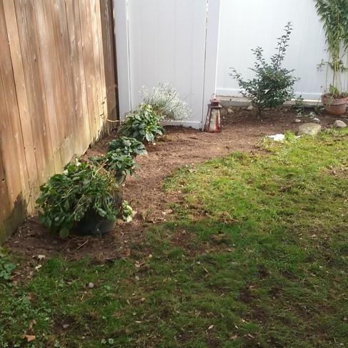 A. Glassman backyard (after).jpg